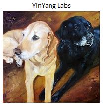 YinYang Labs